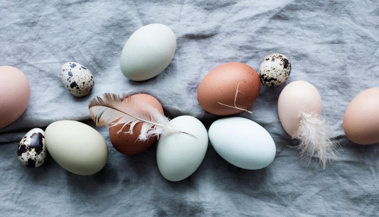 Alt om æg