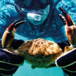 I kløerne på Miamis maritime liv