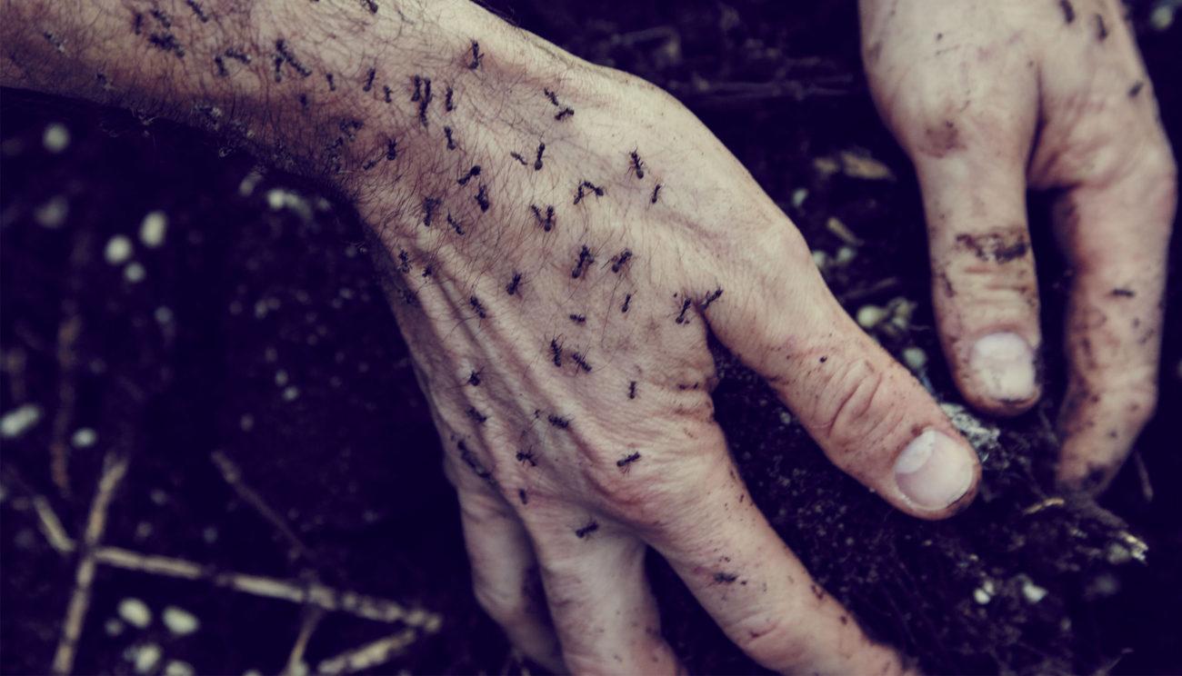 Bidt af myrer