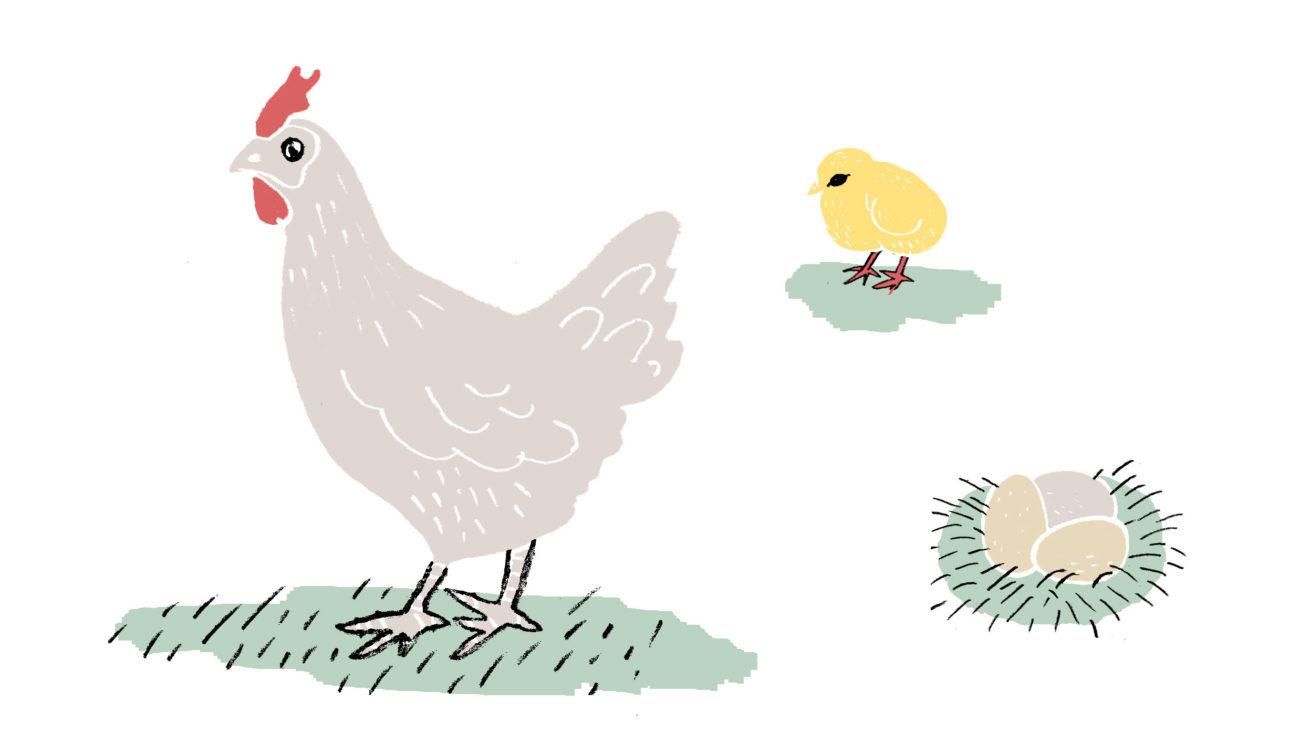 Hønen & ægget