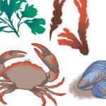 Spis havstokken