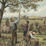 Ciderakademiet – høsten 2017